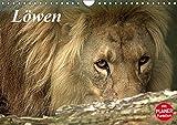 Löwen (Wandkalender 2018 DIN A4 quer): Der König im Tierreich (Geburtstagskalender, 14 Seiten ) (CALVENDO Tiere) [Kalender] [Apr 01, 2017] Klatt, Arno