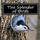 The Splendor of Birds: A Picture Book for Seniors, Adults with Alzheimer's and Others: Volume 5 (Picture Books for Seniors, Alzheimer's Patients. Reading Trouble and Others; A 'No Text' Book)