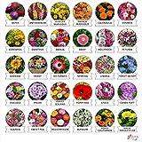 #10: Kraft Seeds 30 Varieties of Flower Seeds Heirloom Seed For Your Garden Beautiful Bloom This Season