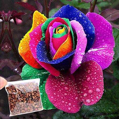 Kaimus 10/50/100/500pcs Regenbogen Rose Samen Einhornrose mehrjährig Bunte Rose Rosensamen Einfach Wachsen Hausgarten Pflanzensamen Geschenk für Verliebte (ca.50 pcs)