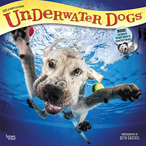 Underwater Dogs 2018 Wall Calendar