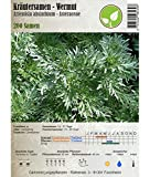 Semi di erbe - Assenzio maggiore - Artemisia absinthium - Asteraceae 200 Semi