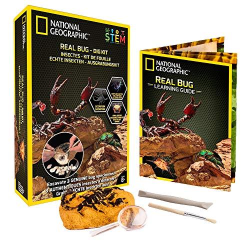nal Geographic- Ausgrabungsset- 3 Insekten zum Ausgraben- Skorpion, Käfer, Stachelspinne- Bildungs-und Wissenschaftsspiel- STEM ()