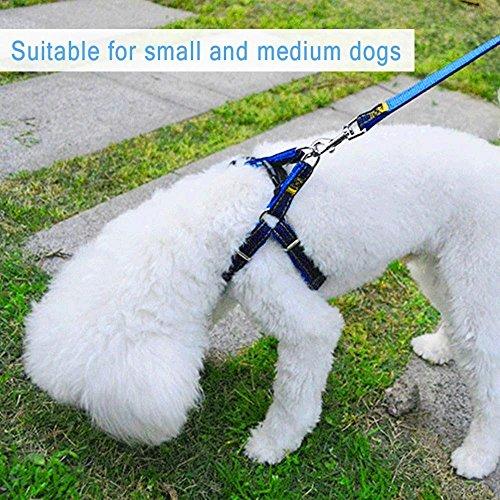 Cablaggio dell'animale domestico, CUGLB Jean cane conduce