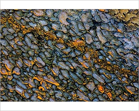 Photographic Print of Colorful Petrified Dinosaur Bone