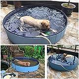 Hunde Swimmingpool - 3