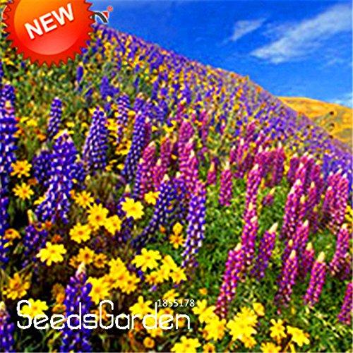 Nouvelles Graines fraîches 200 semences / Lot vivaces Wildflowers Combinaison pot Plantation Wildflower Seeds Color Mix pour Home Garden, # AL33O