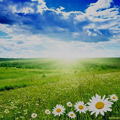 Daylight (feat. Laura Burnam & Michael Neal)