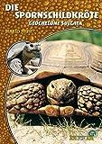 Die Spornschildkröte: Geochelone sulcata (Art für Art)