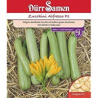 Zucchini Alfresco F1 von Dürr-Samen