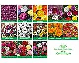 #9: Vysh Agro Flower Seeds Combo 13 Varieties