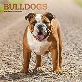 Bulldogs - Bulldoggen 2019 - 18-Monatskalender mit freier DogDays-App (Wall-Kalender)