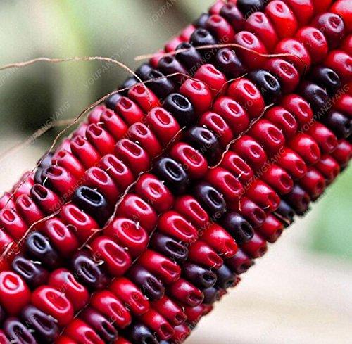 20pcs / sac noir rouge jaune corns graines de légumes graines de fruits jardin de bonsaïs semences potagères pour plantes à la maison rouge