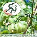 Pflanzen Clips 60 Stk extra groß - Mopalwin Pflanzenklammern stabile Clip für Pflanzen Sicherung Unterstützt Einzupflanzen (30 große + 30 kleine) von Mopalwin - Du und dein Garten