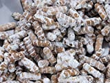 Portal Cool Peine Dientes–(Hericium americanum) Seta Plug Spawn goujons -75
