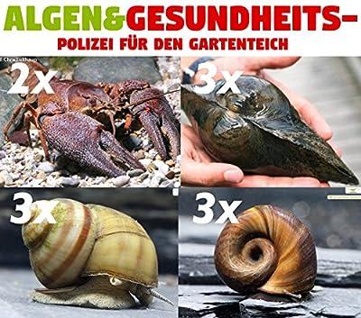 Algen & Gesundheitspolizei für den Gartenteich - 6X Teichschnecken, 3X Teichmuscheln und 2 x Teichkrebse + 1 NH TOXEX Ball