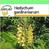 SAFLAX - Garden to Go - Giglio dello zenzero - 10 semi - Hedychum gardnerianum