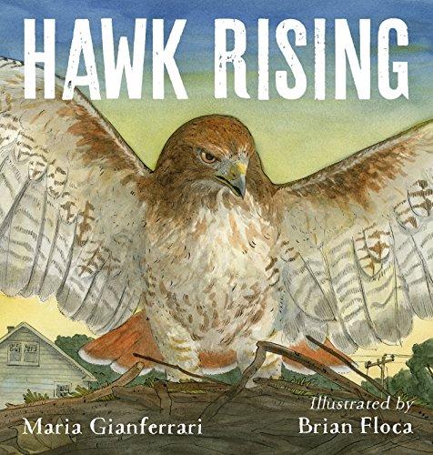 Hawk Rising (English Edition)