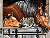 Mammut 8241523 - Painting by Numbers Senior-Pferde und Katze, ca. 30 x 40 cm