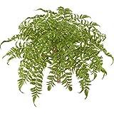 MIHOUNION 2 bouquets plantes artificielles arrangements en gros comme une véritable étanche Evergreen Fougère Faux plantes naturelles Décorer pour Home Table de Cuisine Bureau fête de mariage anniversaire Jardin