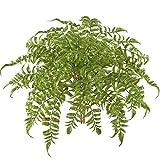 MIHOUNION 2 Bündel Künstliche Boston Farn Pflanze Grün Blätter Kunstpflanzen für Hochzeit Haus Büro Tisch Anordnung Dekor