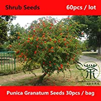 Shopmeeko ^^ Landscaping Punica Granatum ^^^^ 60pcs, Much Loved Beautify Pomegranate Shrub ^^^^, Brightly Coloured Pomegranate Flowers ^^^^