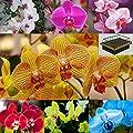 3-teiliges Set Mini-Gewächshaus 10 wunderschöne Orchideen Samen & Anzuchterde von Markenlos auf Du und dein Garten