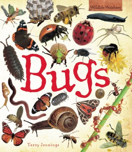 Bugs (QEB Wildlife Watchers)
