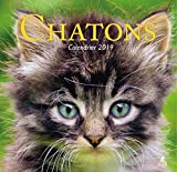 Chatons calendrier 2019