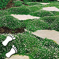 Wiesen Timesok Garten-100pcs Moossamen Immergr/ün Moose Gras Samen Bonsai Dekoration Ball Dekorative f/ür Garten