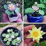 #10: Miniature Lotus Bonsai Plants Seeds Aquatic Plants Blossom Mini Water Lily 10 Seeds for Home & Garden