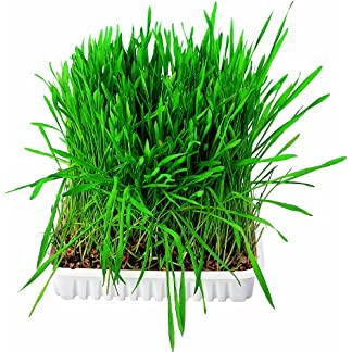 Trixie Small Animal Grass Seed, 100 Gram 7