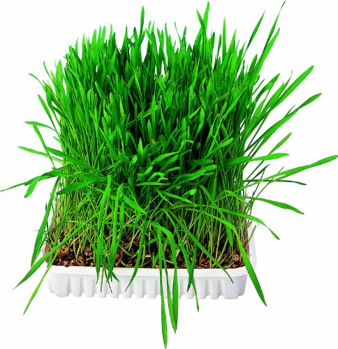 Trixie Small Animal Grass Seed, 100 Gram 1
