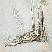 Impresión en metacrilato 30 x 30 cm: Extensor tendons of the toes of a bear paw de Leonardo da Vinci