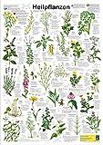 Heilpflanzen (Planet-Poster-Box)
