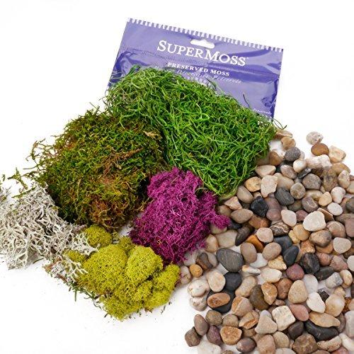 Ellie Arts Supermoos, frisch, spanisch, Grün mit Anderen Farbtönen und Farben, Rentier-Mix, Chartreuse Mix gebündelt mit natürlichen Flusssteinen, Kieselsteinen und Dekosteinen.