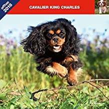 CAVALIER KING CHARLES 2018 - CALENDRIER AFFIXE (KING CHARLES SPANIEL)