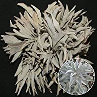 Pittospwer 100Pcs California White Sage Seeds Aromatics cerimoniali sacri Salvia Apiana