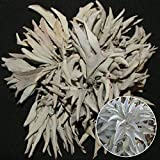Pittospwer 100Pcs California White Sage Seeds Aromatics cerimoniali sacri Salvia Apiana