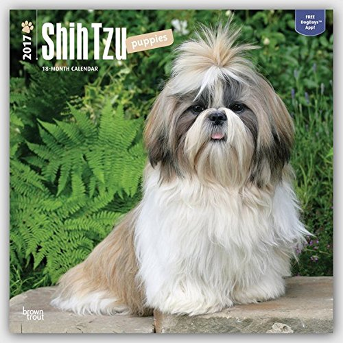 Shih Tzu Puppies 2017