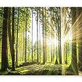 murando - Fototapete Wald 3D 350x256 cm - Vlies Tapete - Moderne Wanddeko - Design Tapete - Wandtapete - Wand Dekoration - Wald Landschaft Natur Sonne Grün Bäume Sonnenuntergang c-B-0098-a-b