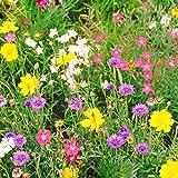 Un paquet 300 Pieces Mixte Wildflower Graines Wildflowers Combinaison fleurs Pelouse Graines pour le bricolage Home & Garden