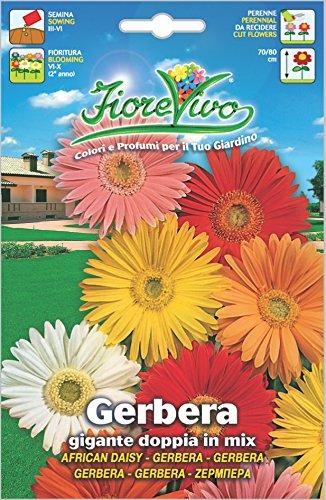 Hortus 60SDFG124 Fiorevivo Gerbera Gigante Doppia, Mix, 13x0.2x20 cm