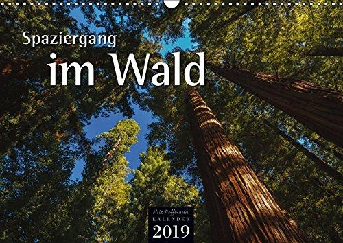 Spaziergang im Wald (Wandkalender 2019 DIN A3 quer): Jahreszeitliche Einblicke in den Wald (Monatskalender, 14 Seiten ) (CALVENDO Natur)