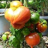 10 Samen Streak Lightning Tomate – aromatische Flaschentomate