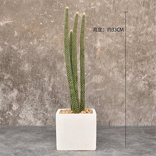 MEILI FLOWER Sukkulenten Kaktus Topfset (mit Blumentöpfe), Silberweide