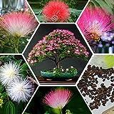 Shopmeeko Bonsai Albizia Julibrissin Baum Mini Topf Baum Diy Hausgarten Bonsai, 20 Particlesseeds/Beutel