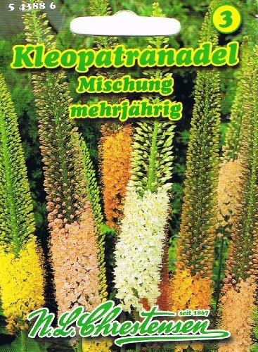 Kleopatranadel Lilienschweif Mischung Eremurus stenophyllus mehrjährig