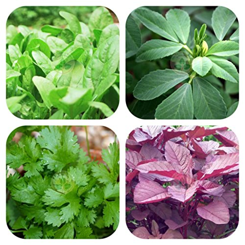 ONLY FOR ORGANIC Combo Of Leafy Vegetable (Four Varieties : 150 Quantity Each), SCOM4 61oa5ZRB7xL
