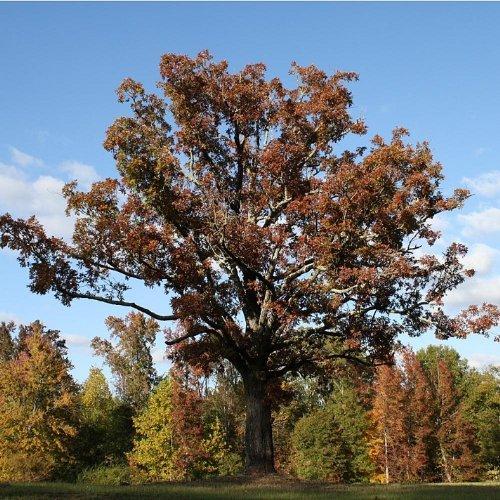 Tree by Joshua Hayes Ethridge